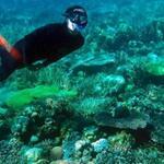 Kemenpar Sertifikasi Pemandu Wisata Selam Ternate