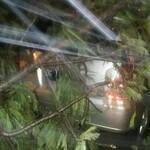 Pohon Tumbang di Grand Dafam Hotel Timpa 5 Mobil