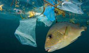 Saat Laut Terpapar Sampah Plastik Jadi Pembahasan Global