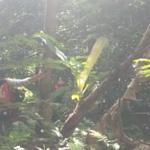 Warga Manado Hilang Saat Berkebun di Hutan Ternate Belum Ditemukan