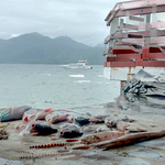 Misteri Laut Maluku Utara Berubah Warna dan Matinya Ikan-Ikan
