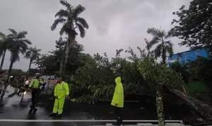 Hujan Deras dan Angin Kencang Tumbangkan Satu Pohon di Soasio Ternate