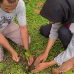Pentingnya Reboisasi di Pesisir Pantai Tidore Maluku Utara