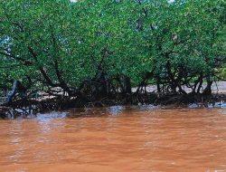 Perairan Teluk Umera di Gebe Halmahera Berubah Warna