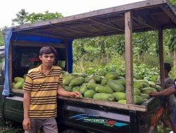 Anak Muda yang Memilih Jadi Petani di Halmahera Sukses Raup Belasan Juta per Bulan