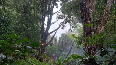 Kejayaan Cengkih Pulau-Pulau di Bawah Angin yang Hilang